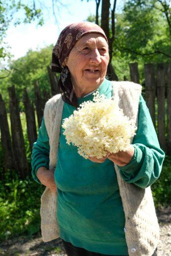 Cette dame cueille des fleurs de sureau pour en faire du sirop