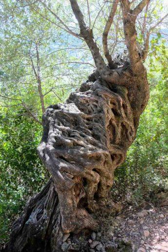 Un vieux tronc sur le chemin
