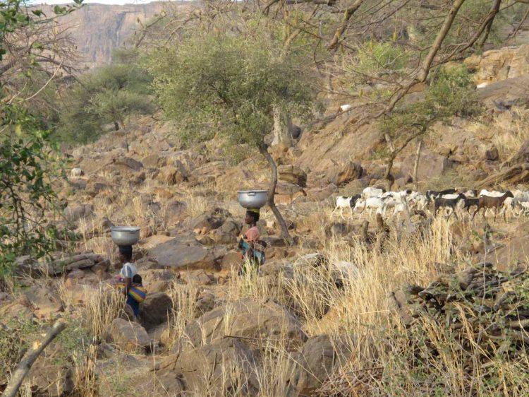 Mali, pays dogon, Néni, femmes revenant du puits