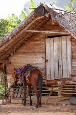 Cuba, Vinales, cheval