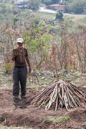 Sur la colline qui mène à la Vigia, un vieil homme fabrique du charbon de bois...