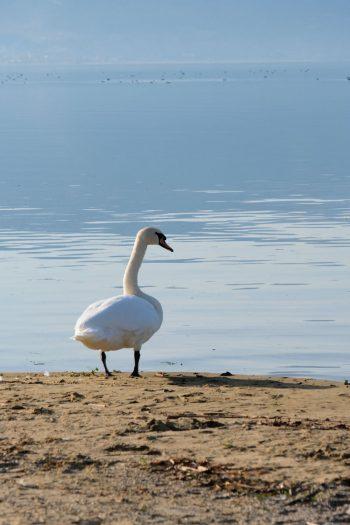Albanie, au bord du lac d'Orhid